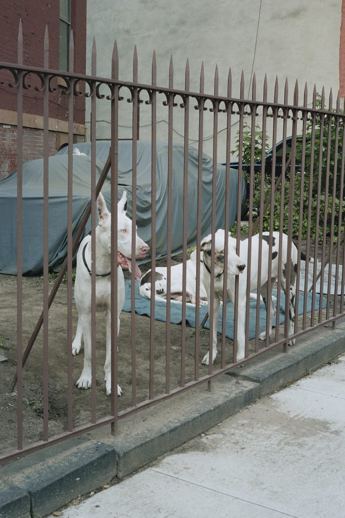 nyc_11_white-dogs-2